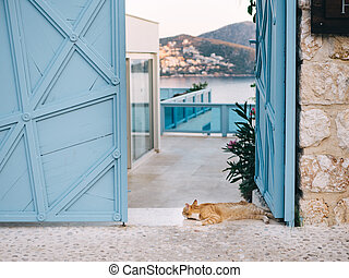 Surprised cat looking at camera lying on beautiful resort background