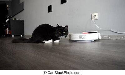 Surprised cat sitting near smart robotic vacuum cleaner in...