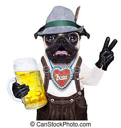 Surprised crazy bavarian dog - silly crazy pug dog dressed...