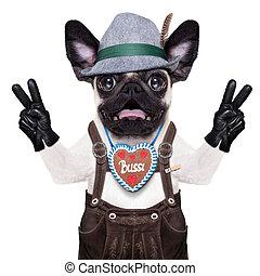 Surprised crazy bavarian dog - silly crazy pug dog dressed...