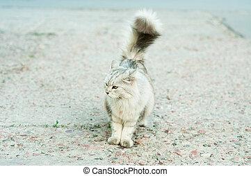 Surprised gray cat on street