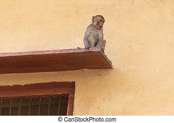 surprised little monkey sitting on visor