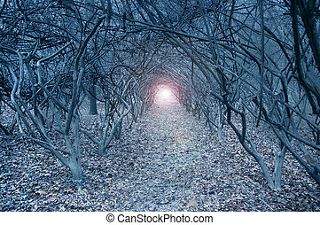 Surreal arch-like trees in a muted grayish dreamlike woods