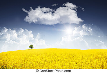 Surreal canola field