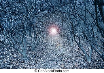 surrealistisk, arch-like, träd, in, a, dämpa, drömlikt,...