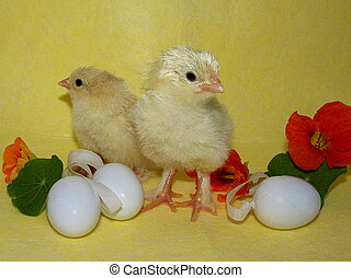 surviving chicks with Easter egg