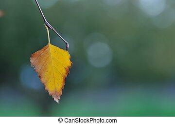 Survivor - Single yellow birch leaf on twig against muted...