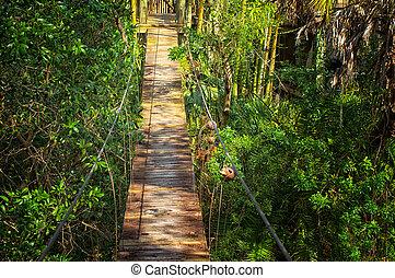 suspended walking bridge in jungle