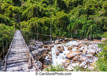 Suspension Bridge in Jungle
