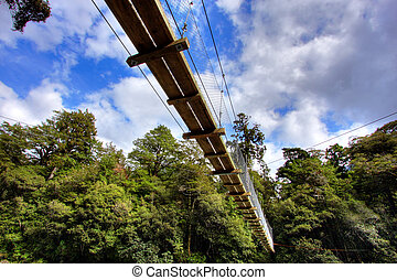 Suspension bridge in New Zealand wilderness