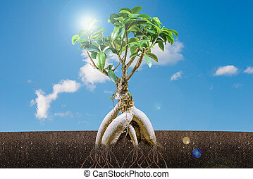 sustainable growth concept: bonsai tree and blue sky