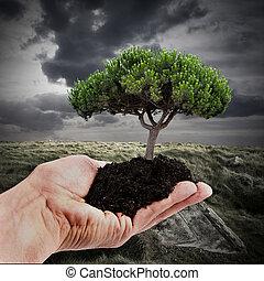 sustainable, skog, reforestation