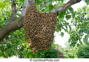 svärm, av, bin, in, a, träd