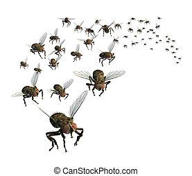 svärm, av, flugor