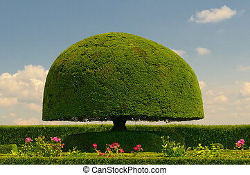 svamp, format, träd
