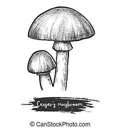 svamp, shroom, europa, sketch., caesar?s