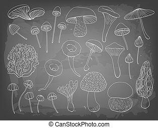 svampe, adskillige, samling