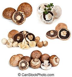 svampe, samling, isoleret, på hvide
