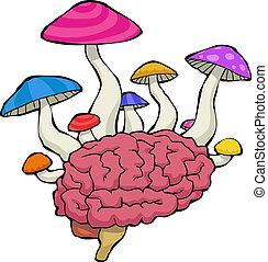 svampen, hjärna