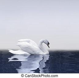 svane, reflektion