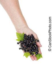 svart, frukt, sommar, vitamins, begrepp, isolerat