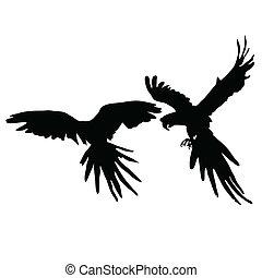 svart, silhuett, två, papegoja