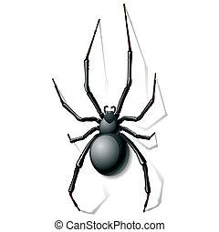 svart, spindel, änka