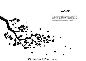 svart, vit, silhuett, sakura, bakgrund