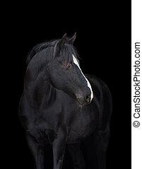 svarting bygelhäst, huvud på, svart