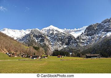 svizzera, olmo