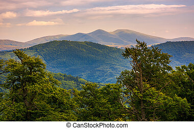 Svydovets ridge behind the beech forest at sunset. beautiful...