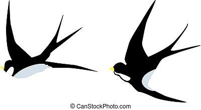 swallow - vector flying swallows birds