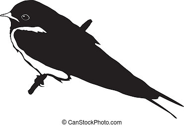 swallow - silhouette of swallow
