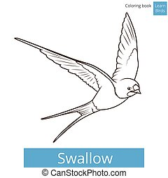 Swallow learn birds educational game vector illustration
