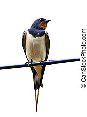 Swallow sits on the cables