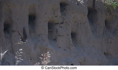 Swallows fly into the nests. Slow Motion - Swallows fly into...