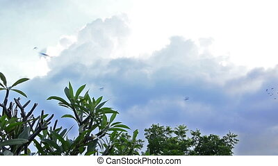 swallows flying in the afternoon in bali/ indonesia