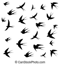 swallows image on white background,
