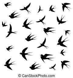 swallows image on white background,