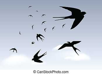 Swallows in the rain sky - Low flies the swallow, rain to...
