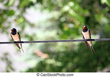 swallows is standing on the wire