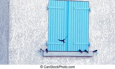 swallows on a windowsill - blue shutter and swallows