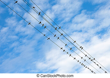 Swallows on electric wires against blue sky.