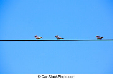Swallows Perched On Overhead Electric Power Cable - swallows...
