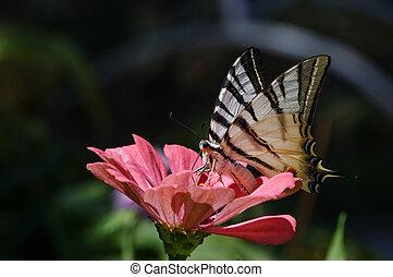Swallowtail butterfly on flower
