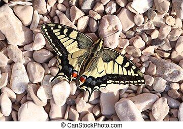 Swallowtail in Europe