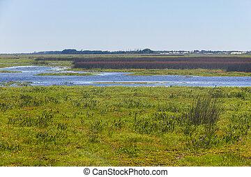 Swamp at Lagoa do Peixe lake