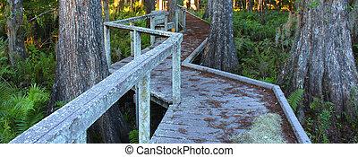 Swamp Boardwalk - Florida