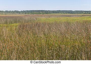 Swamp in Lagoa do Peixe lake
