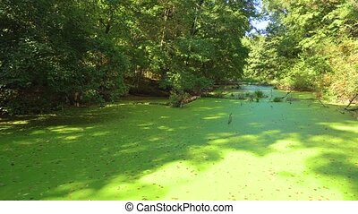 Swamp in the forest with old greenish. Very old view.